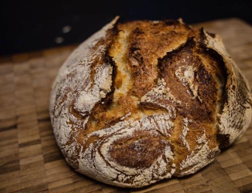 Od semínka k chlebu